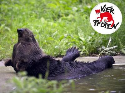 Vier Pfoten Wild- und Heimtierratgeber gratis