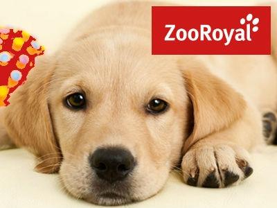 ZooRoyal: Bis zu 12% Rabatt auf Futter