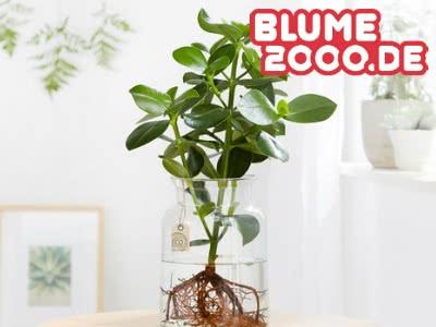 Nur bei uns: bis zu 20% Rabatt bei Blume2000.de