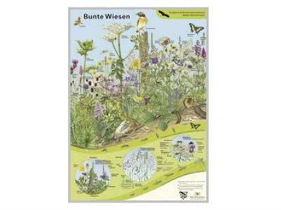"Artenschutz-Poster ""Bunte Wiesen"" gratis"