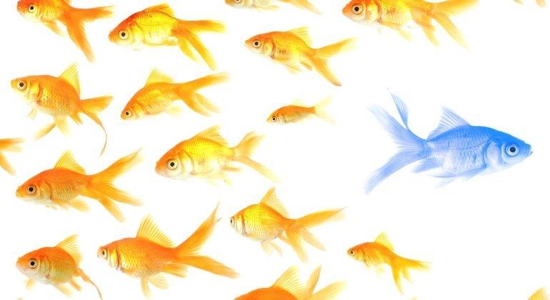 Antizyklisch einkaufen: Nur tote Fische schwimmen mit dem Strom
