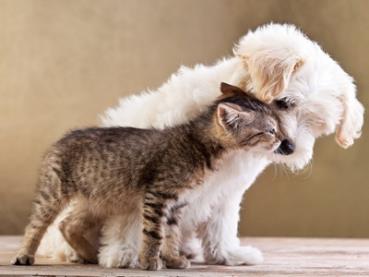 Haustiere beleben die Familie