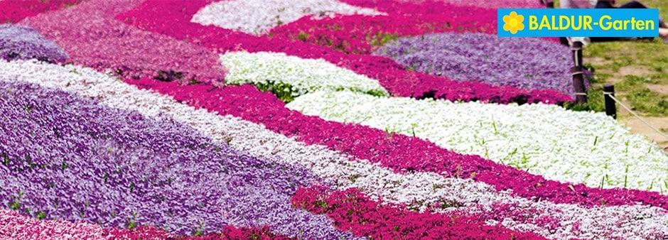 Der Frühling ruft: 10€ Rabatt bei Baldur-Garten